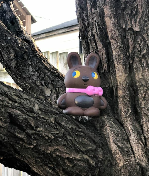 squat brown bunny with sideways glance, in tree